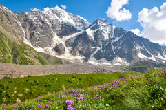 Alta montaña con el glaciar, debajo del prado de la flor imagenes de archivo