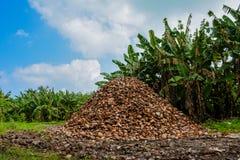 Alta montaña de las cáscaras del ` s del coco Foto de archivo libre de regalías