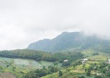 Alta montagna con il nebbioso Fotografia Stock