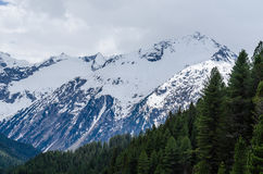 alta montagna con neve e la foresta Fotografia Stock Libera da Diritti
