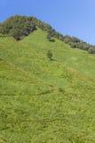 Alta montagna e campo verde nella stagione estiva Fotografia Stock Libera da Diritti