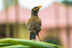 Alta mosca dell'uccello alta immagini stock