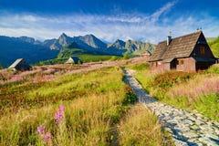 Alta natura Carpathians Polonia del paesaggio della cima delle montagne di Tatra Immagini Stock