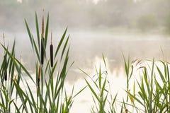 Alta nebbia a lamella sul lago all'alba Immagini Stock