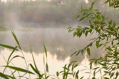 Alta nebbia a lamella sul lago all'alba Immagine Stock Libera da Diritti