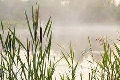 Alta nebbia a lamella sul lago all'alba Fotografia Stock
