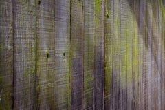 Alta ombra della rete fissa di legno verde del muschio Fotografia Stock Libera da Diritti