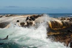 Alta onda en la isla del sello Imagen de archivo libre de regalías