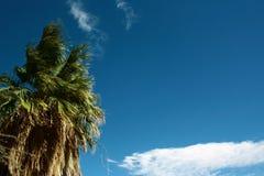 Alta palma Fotografie Stock