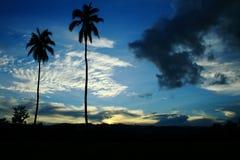 Alta palma Fotografia Stock Libera da Diritti