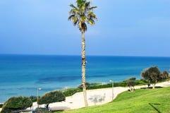 Alta palma con i rami verdi Fotografia Stock Libera da Diritti