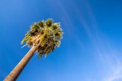 Alta palma contro il cielo blu Fotografia Stock