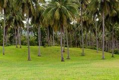 Alta palma fertile, molti alberi, su un giacimento della collina verde Immagine Stock Libera da Diritti