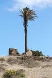 Alta palma nella città di Haria, Immagini Stock