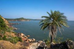 Alta palma sola verde sulla montagna contro il mare nell'esotico Fotografie Stock Libere da Diritti