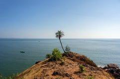 Alta palma sola verde sulla montagna contro il mare nell'esotico Immagini Stock Libere da Diritti