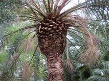 Alta palmera Cerdeña, Cagliari Belleza de la naturaleza fotografía de archivo libre de regalías