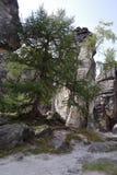 Alta parete della roccia con gli alberi Fotografie Stock