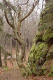 Alta parete della roccia in legno Immagini Stock