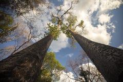 Alta prenotazione del baobab in Ankarana, Madagascar Fotografia Stock Libera da Diritti