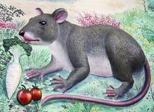 Alta relevación de la rata y pintura de pared Fotografía de archivo libre de regalías