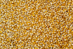 alta risoluzione del fondo del cereale Immagini Stock