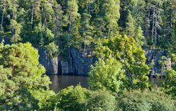 Alta riva rocciosa, alberi sulle rocce Albero nel campo Fotografie Stock