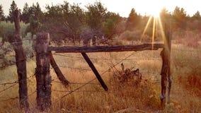 Alta salvia del deserto Fotografia Stock Libera da Diritti