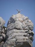 Alta scogliera pura con un gabbiano sulla cima Immagini Stock