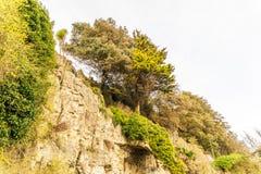 Alta scogliera, vegetazione fertile della sommità, alberi d'espansione, ferrovia del metallo Immagini Stock Libere da Diritti