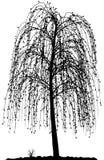Alta silueta detallada del árbol en el fondo blanco. Fotos de archivo libres de regalías
