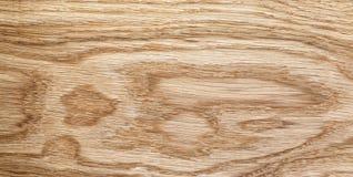 Alta struttura dettagliata della quercia naturale Immagini Stock