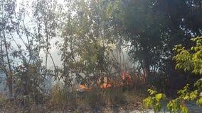 Alta temperatura de queimadura da dívida de Peatlands anomalamente, catástrofe natural, incêndios violentos video estoque
