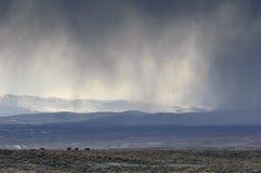 Alta tempesta di deserto Immagine Stock Libera da Diritti
