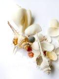 Alta todavía del clave vida de shelles fotografía de archivo libre de regalías