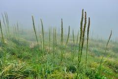 Alta tundra alpina del paesaggio in nebbia pesante di mattina Immagine Stock