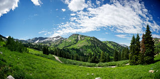 Alta Utah Mountain Meadow Royalty Free Stock Photography