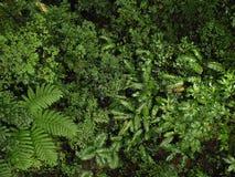 Alta vista alta della giungla Fotografia Stock