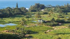 Alta vista de los campos del taro en el camino de Maui a Hana almacen de video