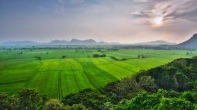 Alta vista del campo verde Immagini Stock Libere da Diritti