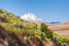 Alta vista del paesaggio del deserto del Mt cappuccio Fotografie Stock
