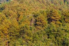 Alta vista della foresta Immagini Stock