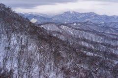 Alta vista della foresta sfrondata e delle montagne coperte di neve Fotografia Stock