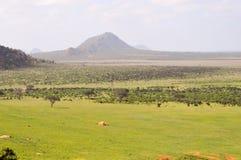 Alta vista della savana e delle colline Immagini Stock