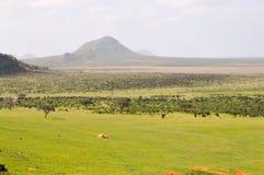 Alta vista della savana e delle colline Fotografia Stock