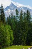 Alta vista della sorgente di Tatras (Slovacchia). Fotografie Stock