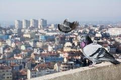Alta vista general de Varna, Bulgaria Paloma en el primero plano Fotografía de archivo