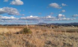 Alta yucca del deserto Immagine Stock Libera da Diritti