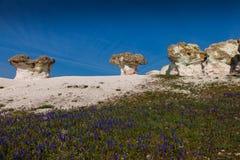 altai山蘑菇自然现象俄国石头 免版税库存照片
