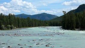 altai日持续山夏天 河Argut 美好的高地横向 俄国 西伯利亚 股票录像